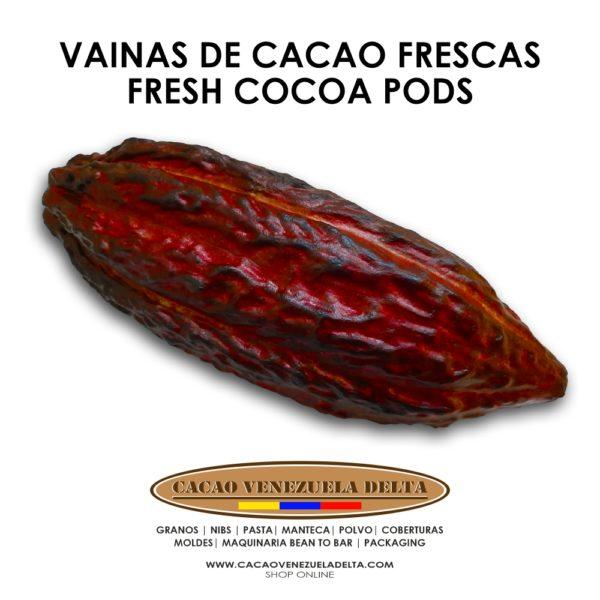 VAINAS DE CACAO - CACAO VENEZUELA DELTA